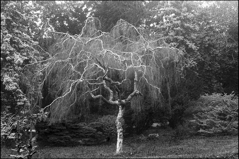 Tree 2725