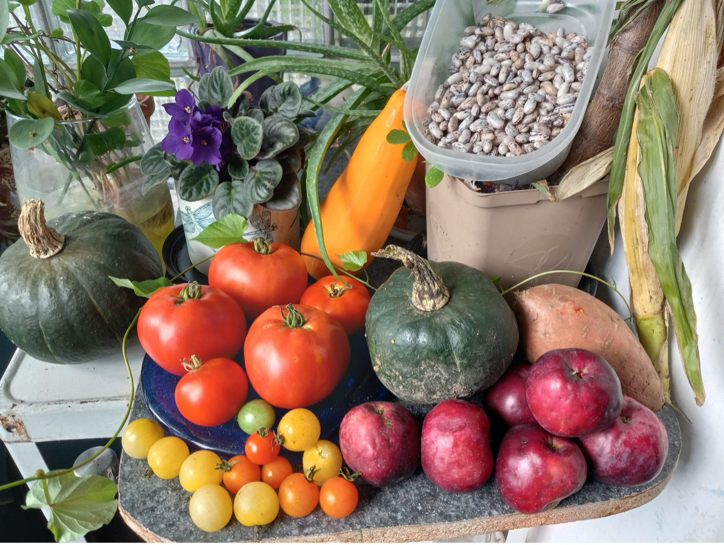 Autumn Harvest -  Photo by Linda Tu